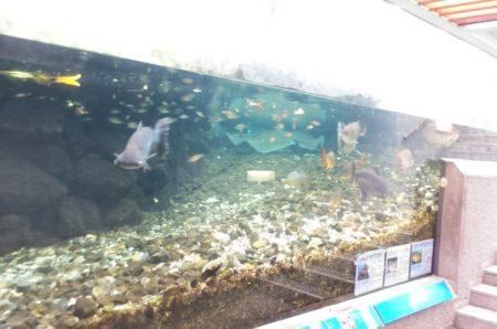 板橋区立熱帯環境植物館水族館02