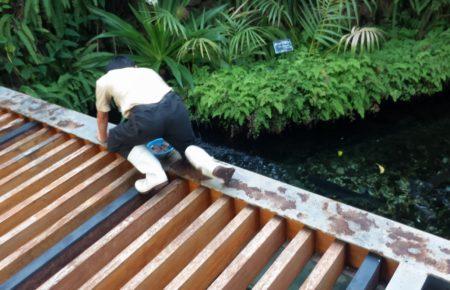 板橋区立熱帯環境植物館餌やり01