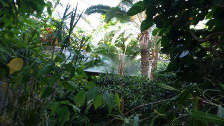 板橋区立熱帯環境植物館02